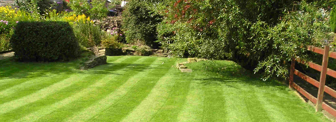 Summer Lawn Care
